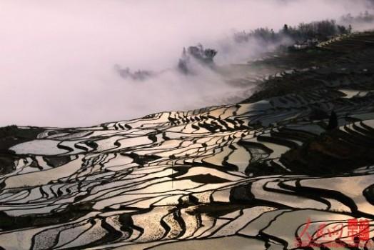 Терраса Yuanyang