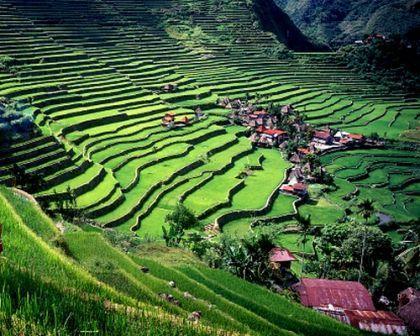 Рисовые террасы Banaue