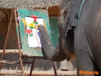 Слон,рисует,картинку,Таиланд